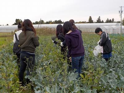 収穫風景.jpg