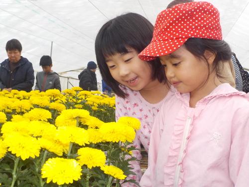 菊を眺める女子2名.JPG