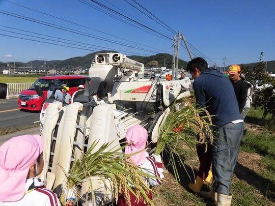 稲刈り体験5.JPG