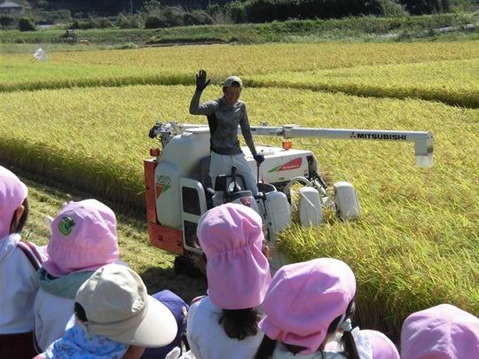 稲刈り体験6.JPG